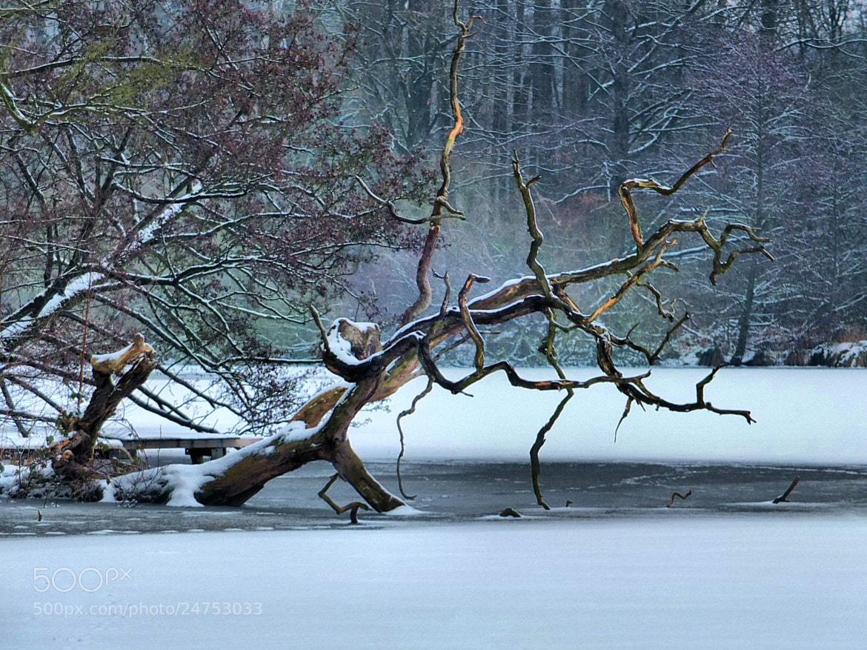 Photograph Eingefroren by editha sieben on 500px