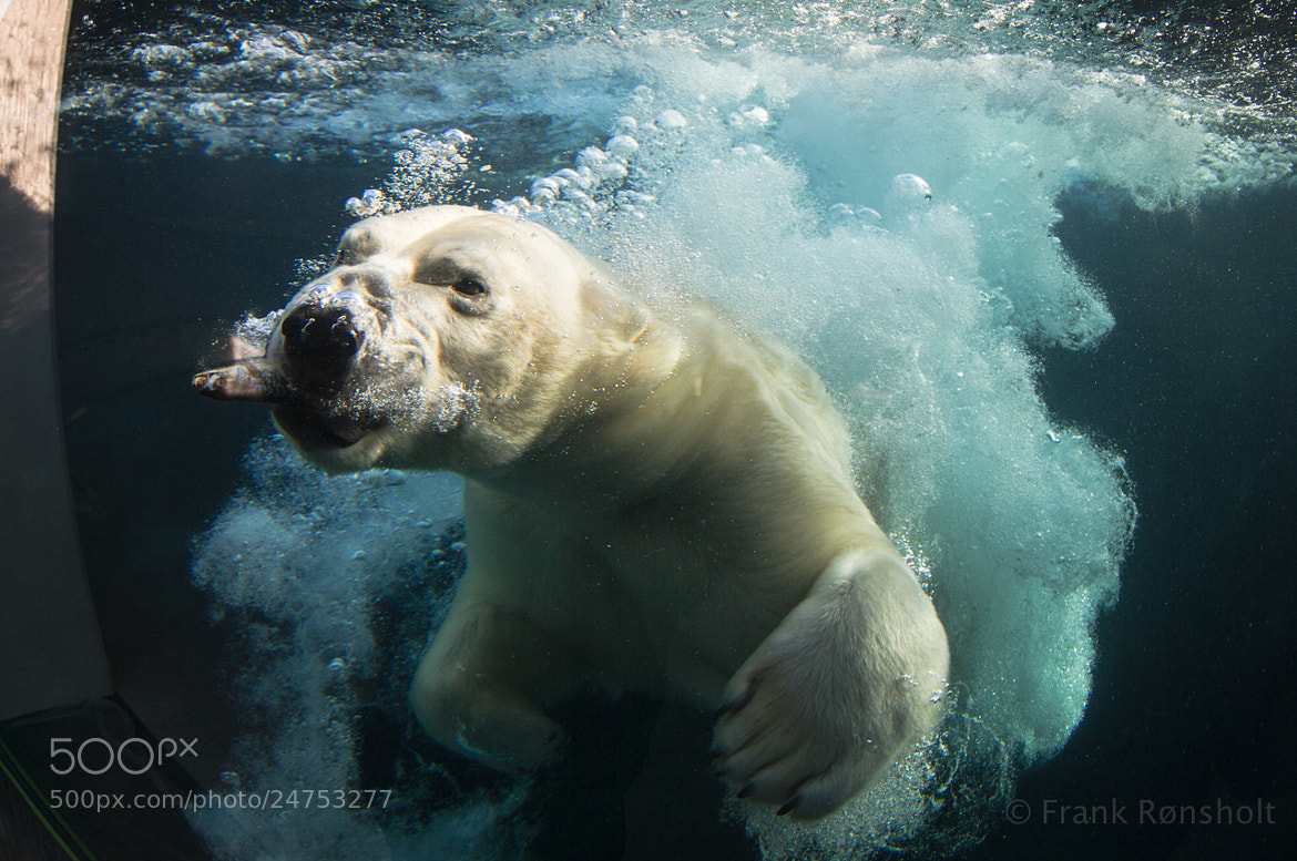 Photograph Happy bear! by Frank Rønsholt on 500px