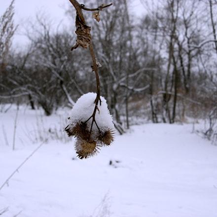 Снежный покров...., Sony DSC-N2