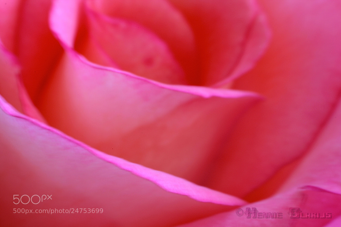 Photograph Crying pink by Hennie Clarijs on 500px