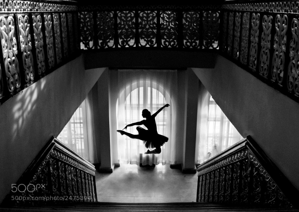 Photograph BLACK SWAN by MEHMET ULUYURT on 500px
