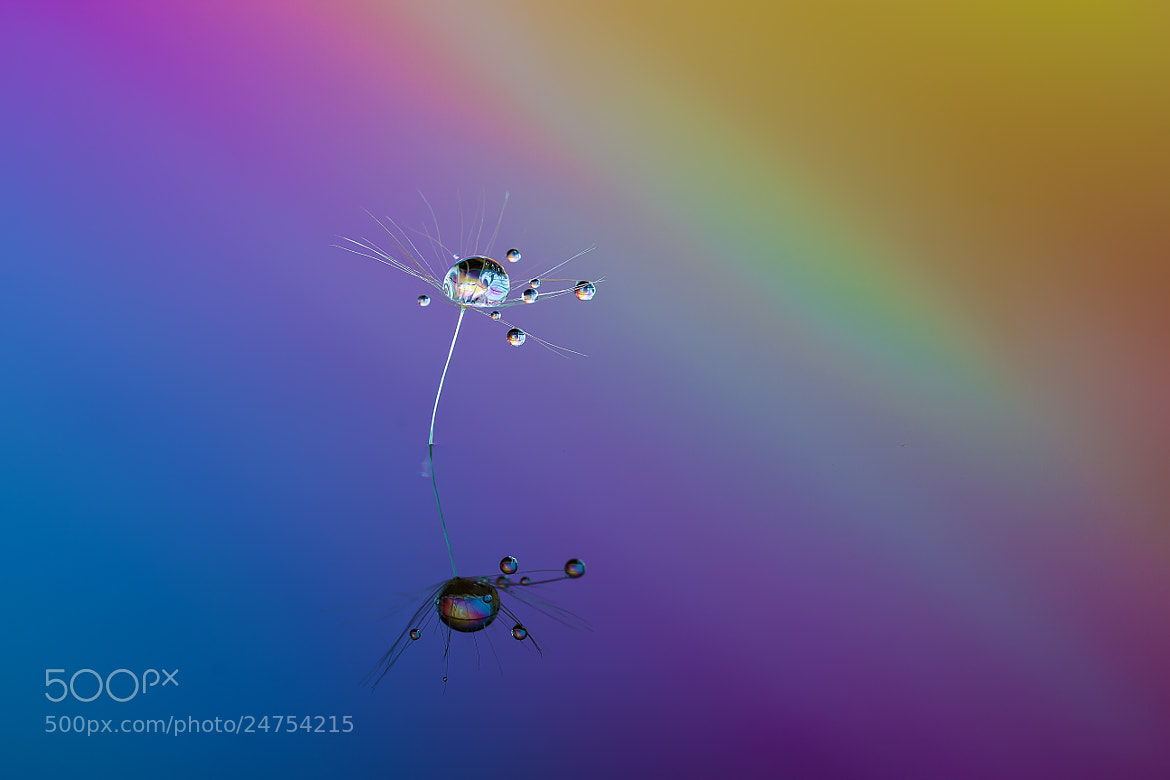 Photograph Droplets dance by Miki Asai on 500px