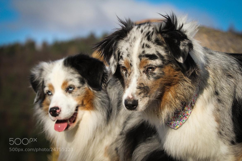 Photograph Girl & Boy  by Nicole Henseler on 500px