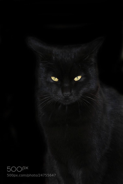 Photograph Black cat by Hiroshi Oka on 500px