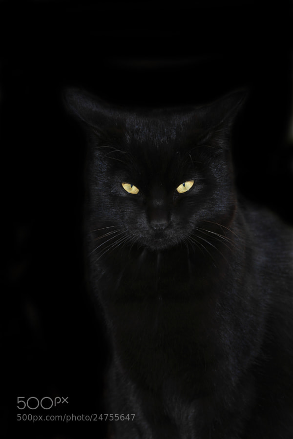 Photograph Black cat by Hiroshi Oka on 500px