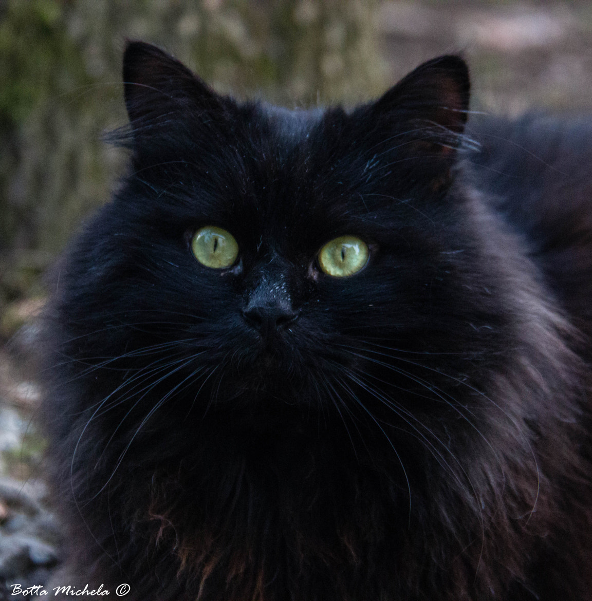 Photograph Black Demon by Michela Botta on 500px