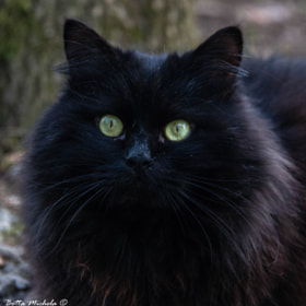 Black Demon by Michela Botta (mikyloved)) on 500px.com
