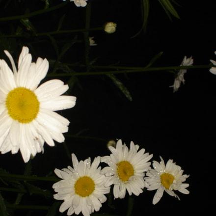 Flowers in the dark, Sony DSC-L1