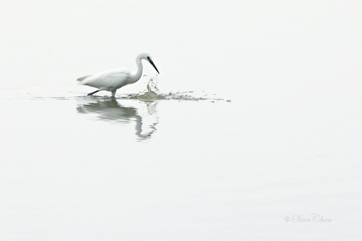 Photograph Egret by Sara Chan on 500px