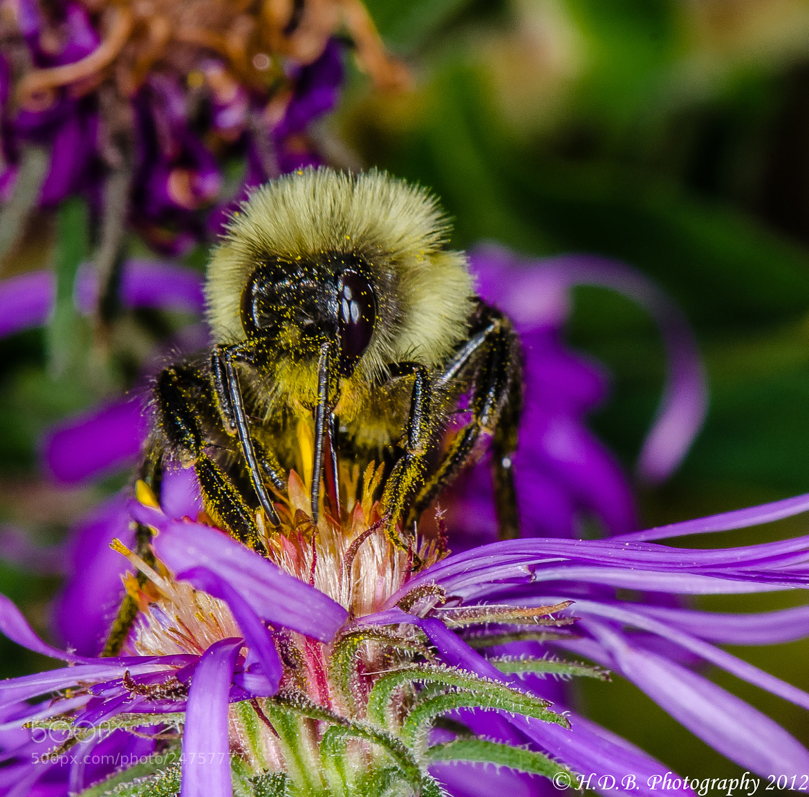 Photograph Bee Happy by Harold Begun on 500px