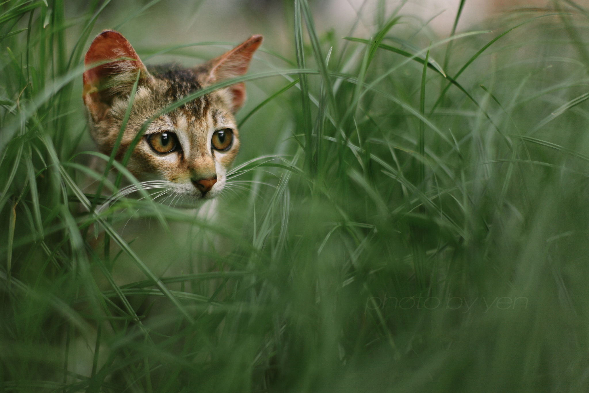 Photograph new kitten by Nazrin Shah on 500px