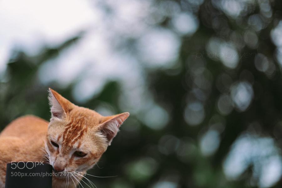photogenic  kitten by Nazrin Shah (NazrinShah)) on 500px.com