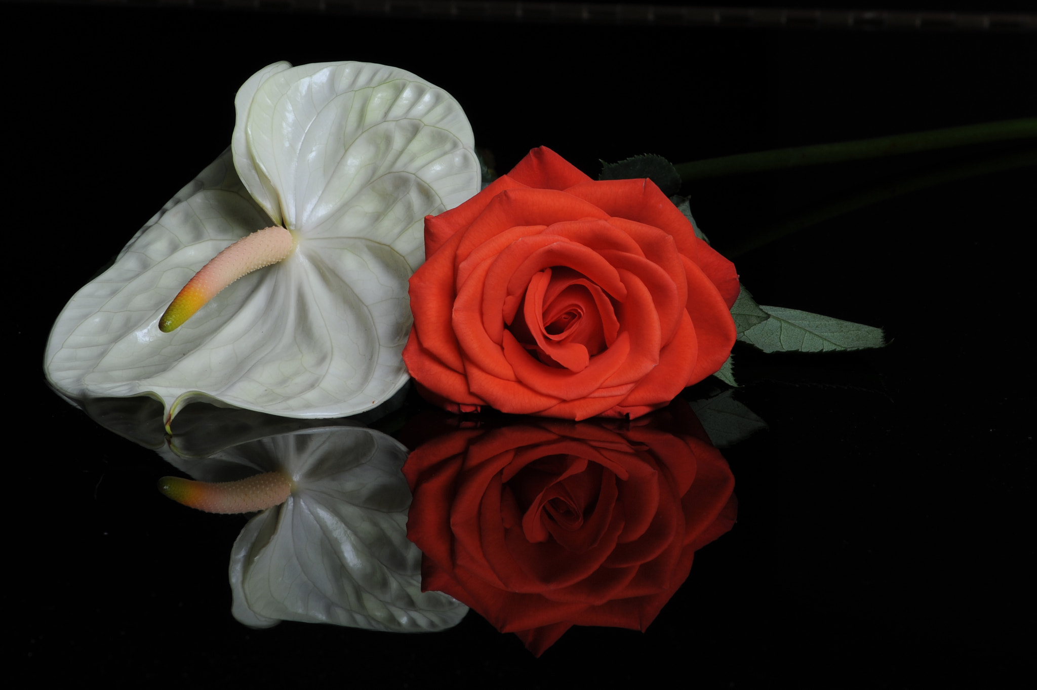 Photograph Anthurium and rose by Cristobal Garciaferro Rubio on 500px