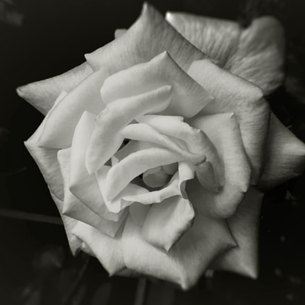Rosa B W copia, Panasonic DMC-FS5