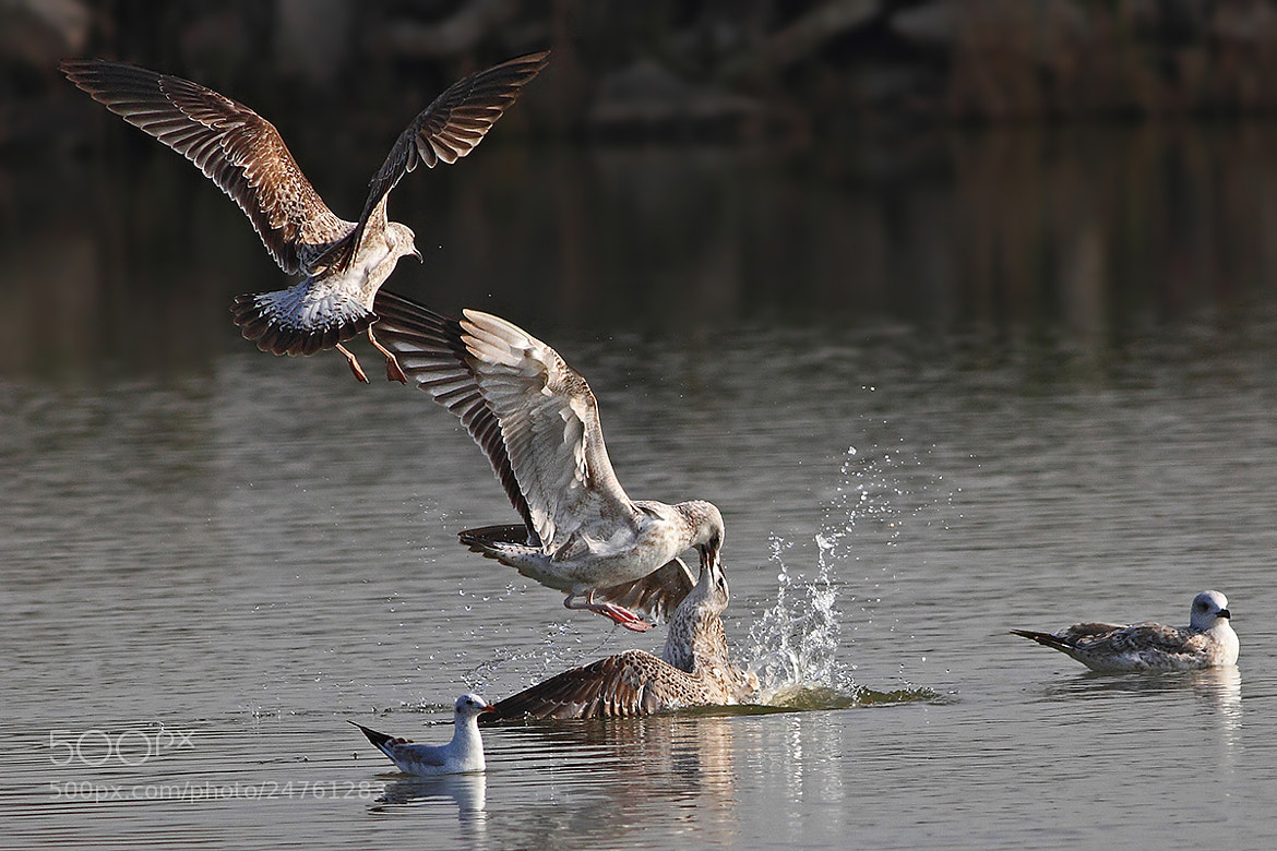 Photograph Fight by Yuri Gomelsky on 500px