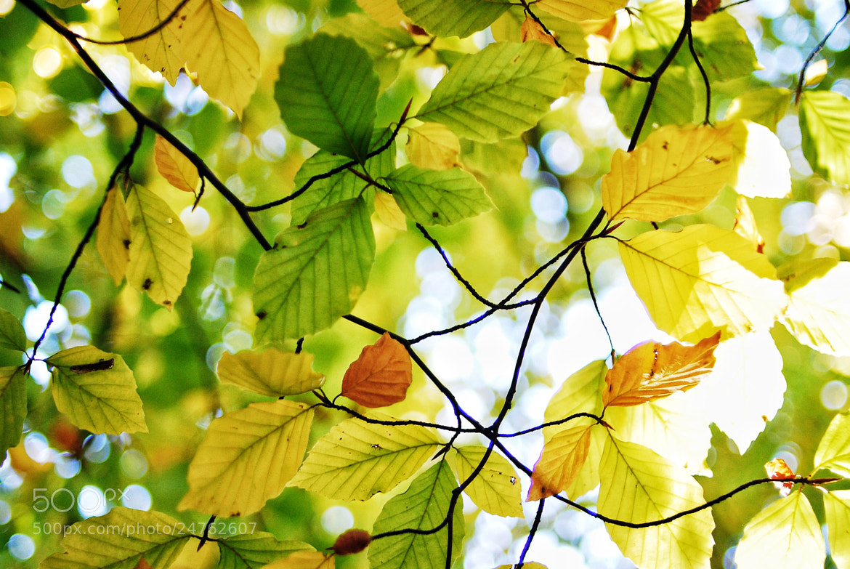 Photograph autumn by Alexander Männel on 500px