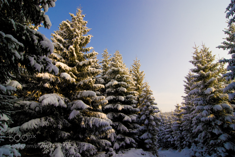 Photograph Winterwonderland by Alexander Männel on 500px