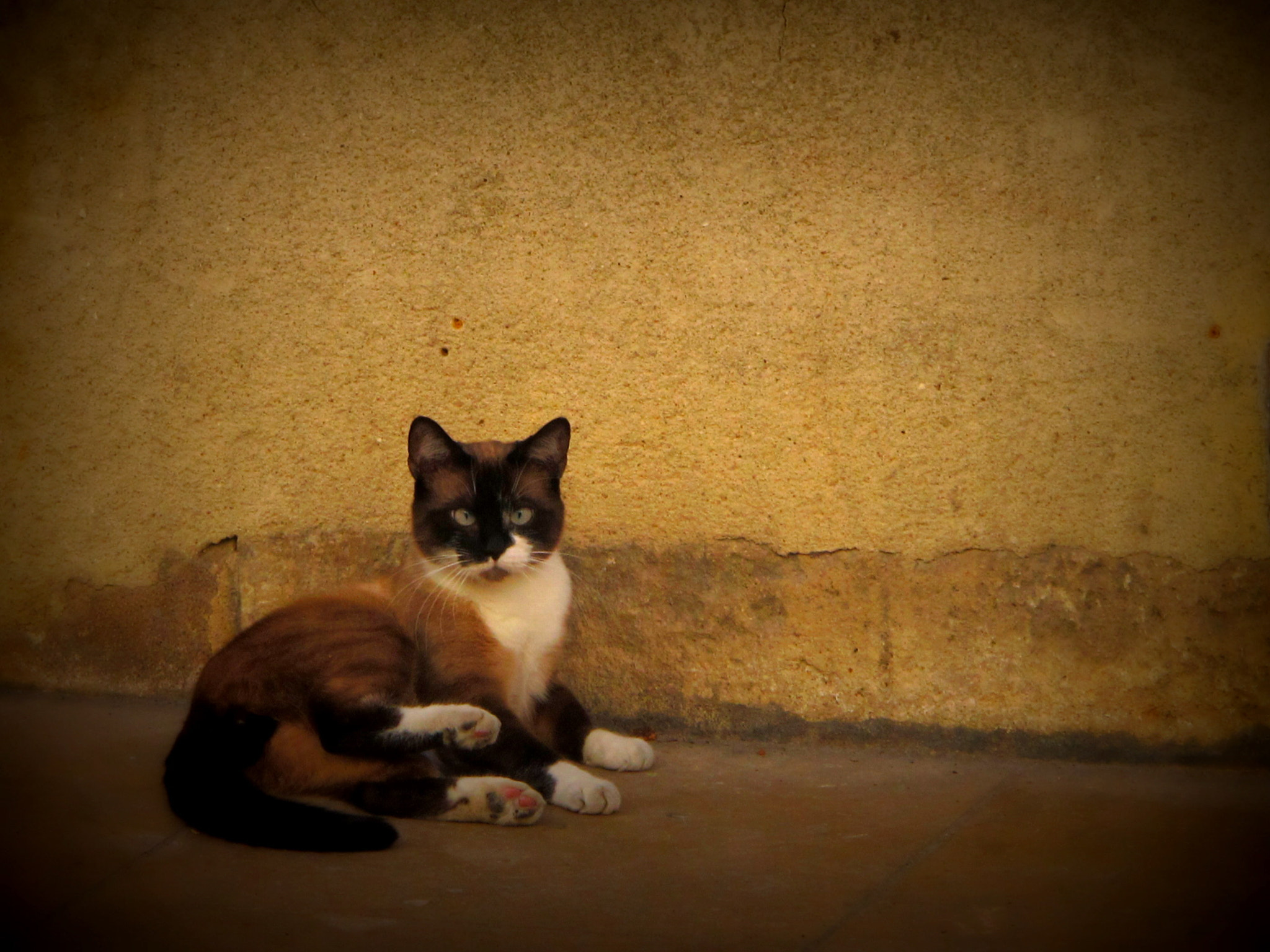 Photograph Umbrian cat II by Ceesjan Frank on 500px