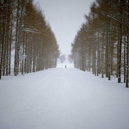 Snow Road, Pentax K-50, smc PENTAX-DA 35mm F2.4 AL