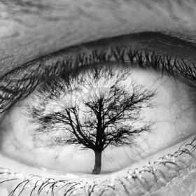 Ephemeral visualizations | Treeye