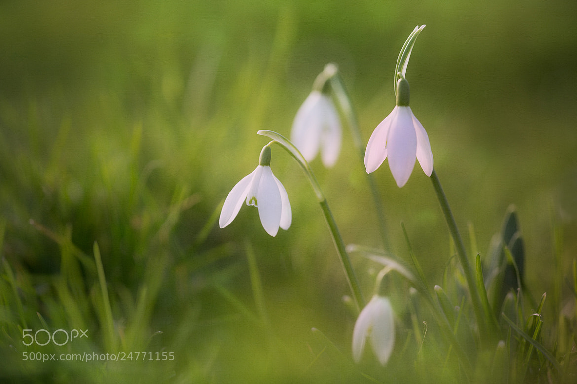 Photograph It felt like spring today by Penny Myles on 500px
