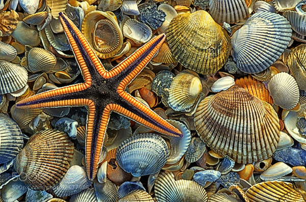 Photograph Starfish and Shells by Mike Moats on 500px