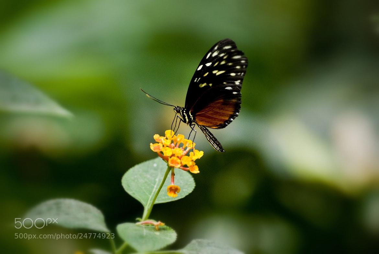 Photograph Butterfly by Alexander Männel on 500px