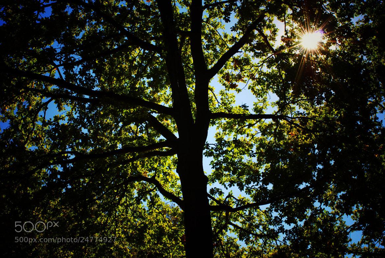 Photograph sunshine by Alexander Männel on 500px