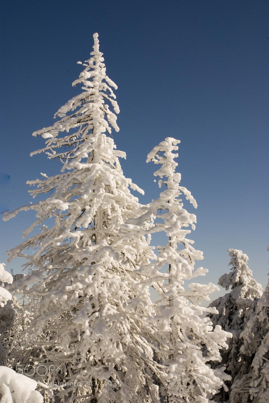 Photograph ..winter.. by Alexander Männel on 500px