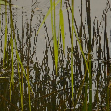 Reeds ripples and reflections, Nikon COOLPIX S3400