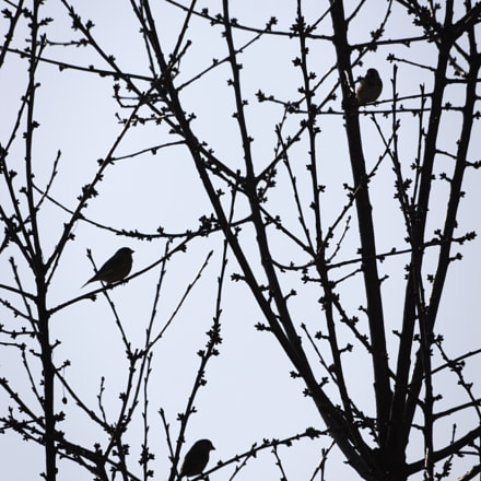 Bird gang, Canon EOS 1100D, Sigma 70-300mm f/4-5.6 [APO] DG Macro
