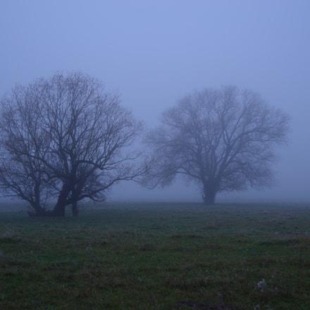 trees in the fog, RICOH PENTAX K-1, Tamron SP AF 28-75mm F2.8 XR Di LD Aspherical [IF] Macro