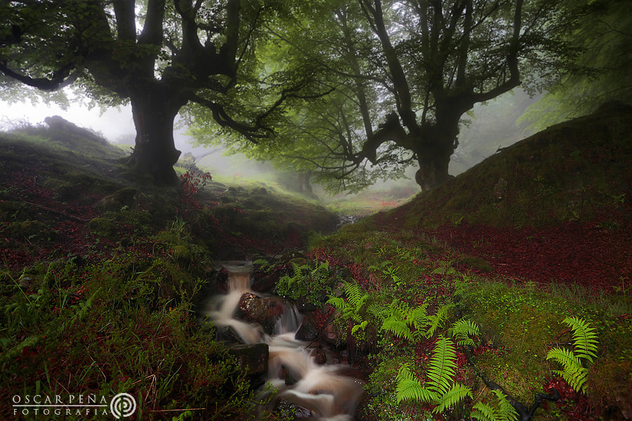 Photograph - Secrets of the forest II - by Oscar  Peña on 500px
