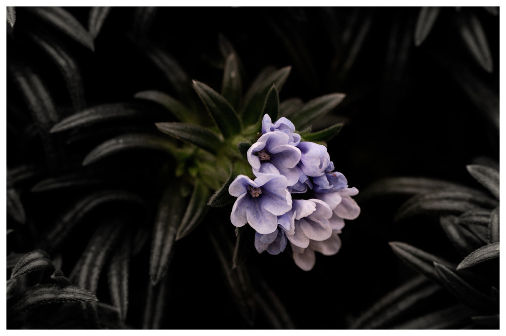 Photograph Small flowers... by Almqvist Photo on 500px