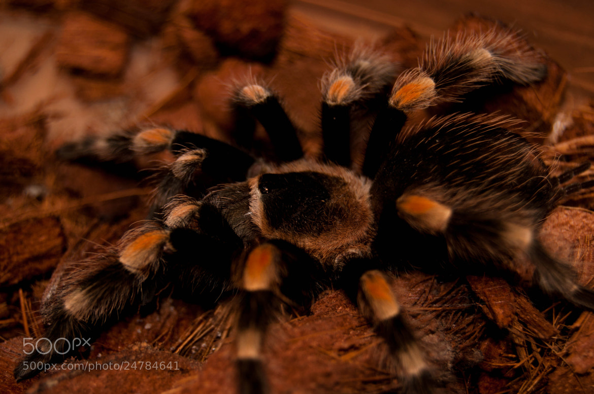 Photograph Smithi  by Norbert  Walczak on 500px