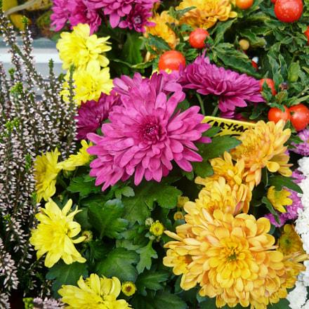 Flowers from Vienna, Panasonic DMC-LS80