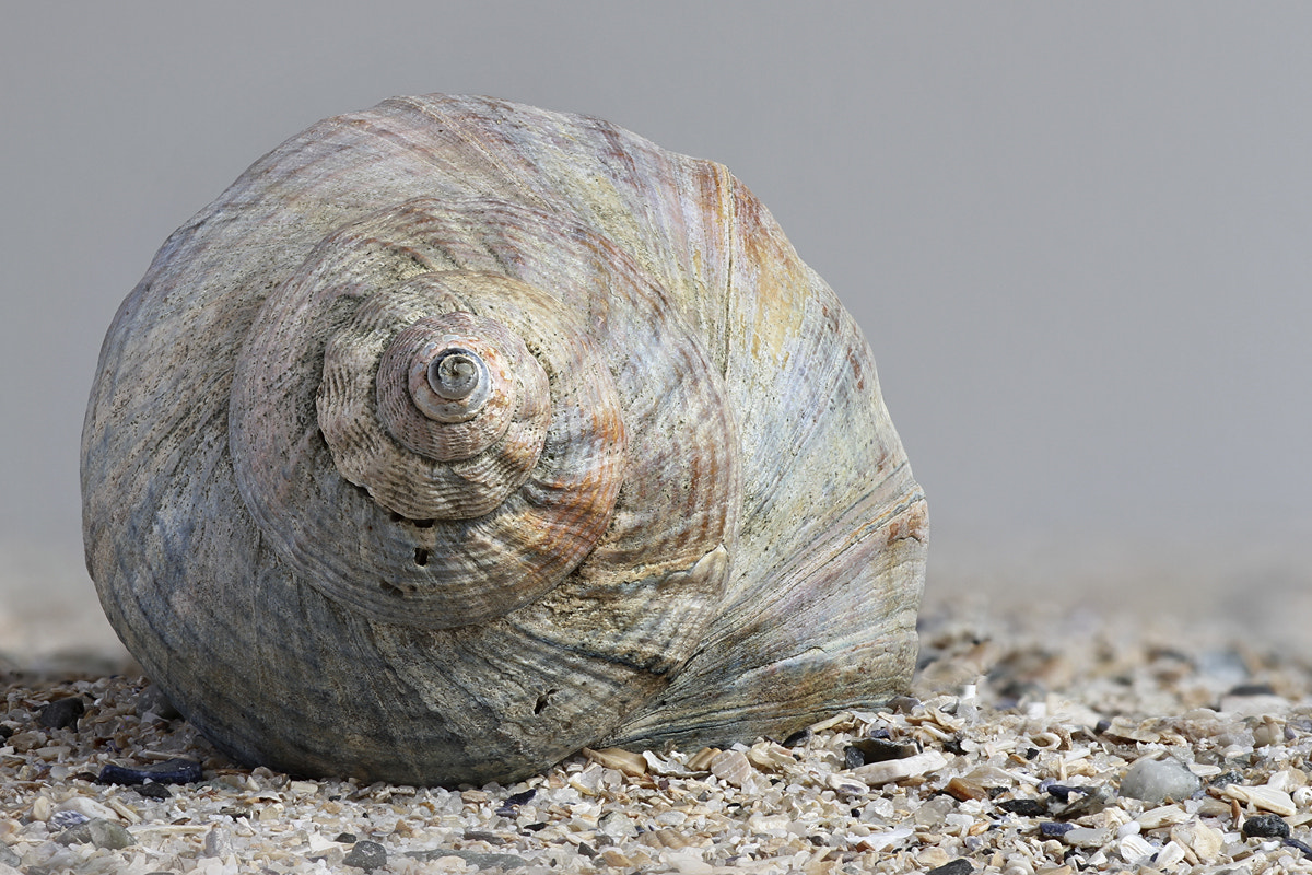 Photograph Shell by Jan Westerhof on 500px