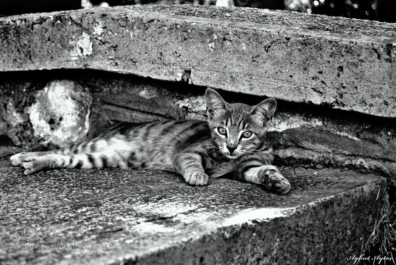 Photograph monochrome cat by Aykut Aytaç on 500px