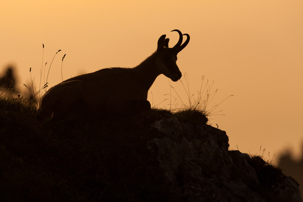 Photograph Silhouette by Marc Pihet on 500px