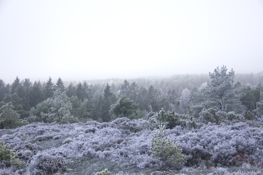Frost and fog #4 by Kristoffer  (fotokoffe)) on 500px.com