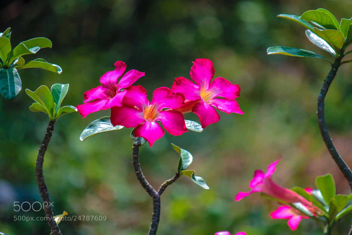 Photograph flower by Buddhapong Wongsanont on 500px