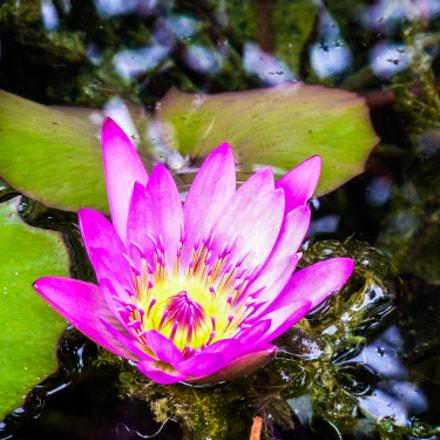 Flor de loto, Panasonic DMC-ZS7