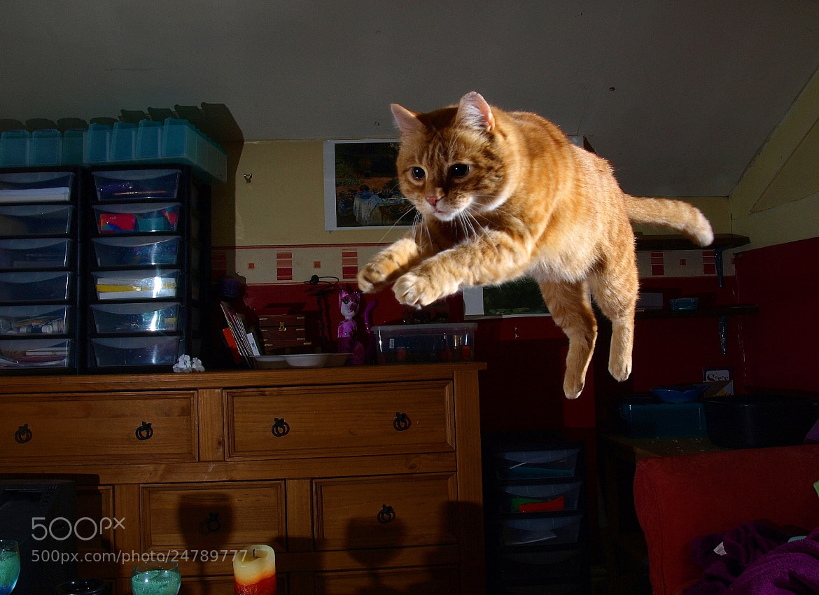 Photograph Jumping cat by Turnip Towers on 500px