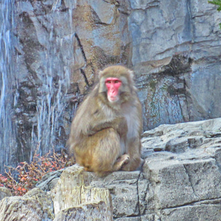 Central Park Zoo, nyc, Canon POWERSHOT SD970 IS