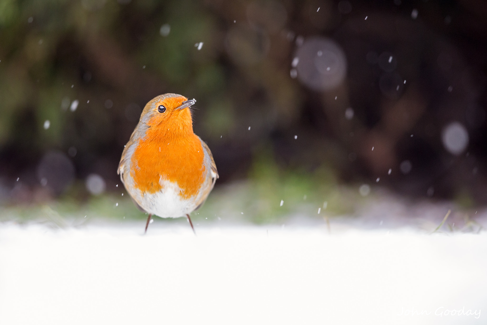 Photograph Let is snow, let it snow... by John Gooday on 500px