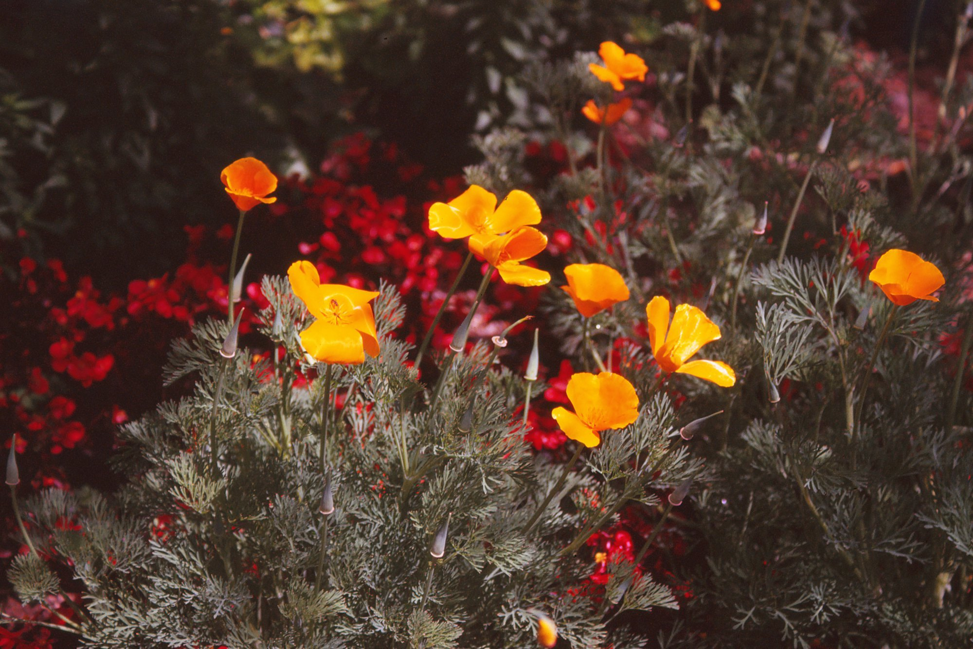 Photograph Poppies by Thomas Webb on 500px