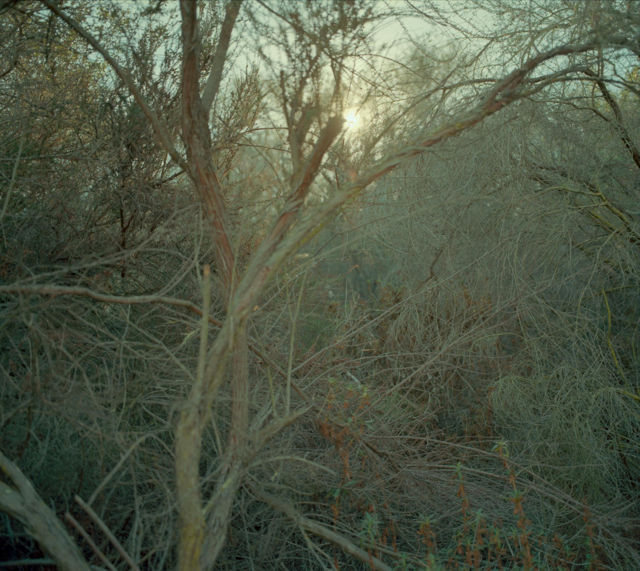 Photograph Thicket by Thomas Webb on 500px