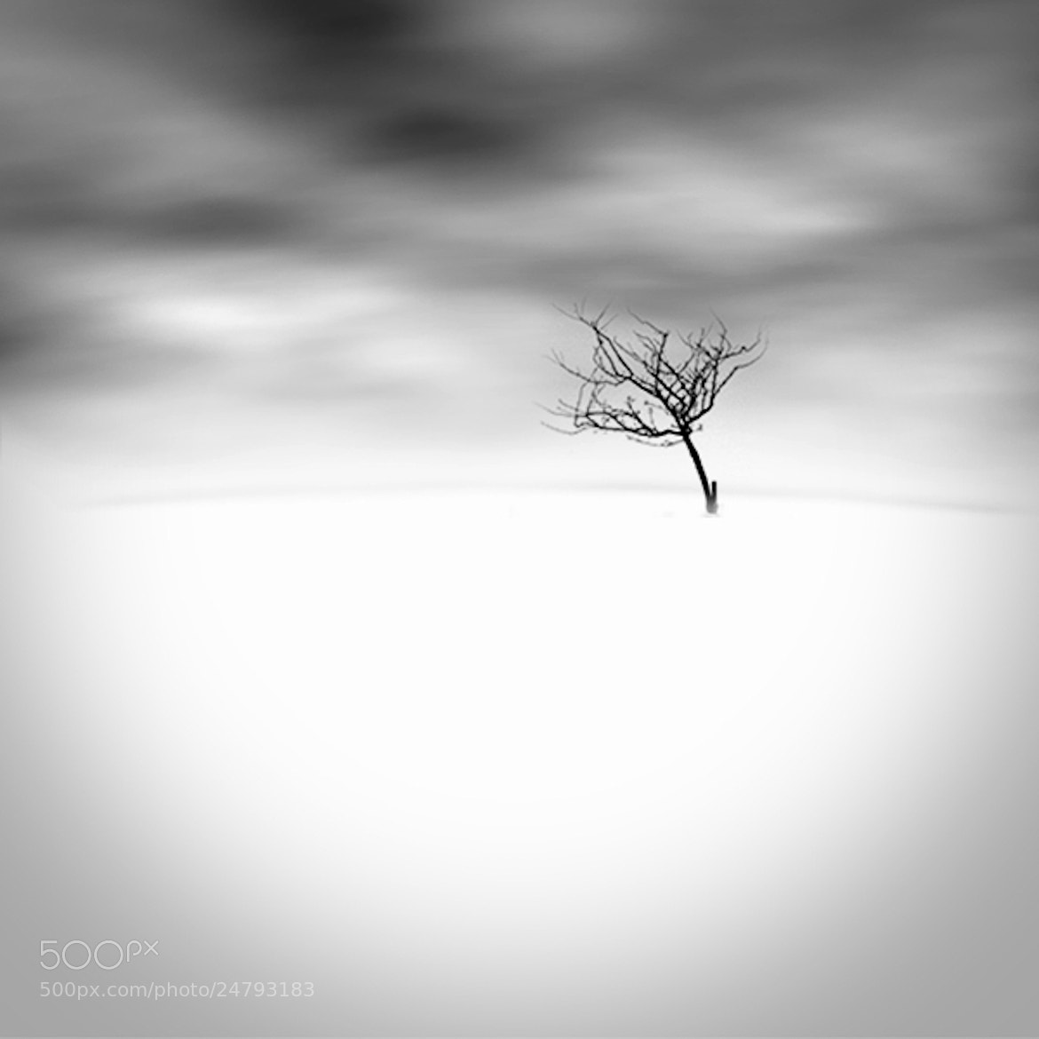Photograph lonely tree by Andreas D. on 500px