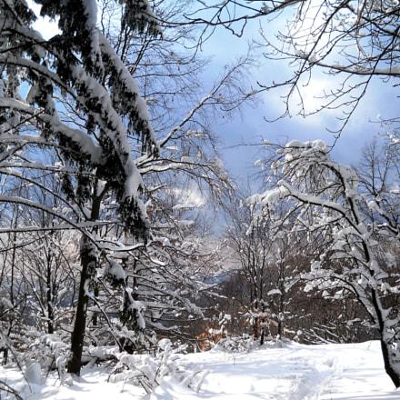 Winter forest, Nikon COOLPIX L21