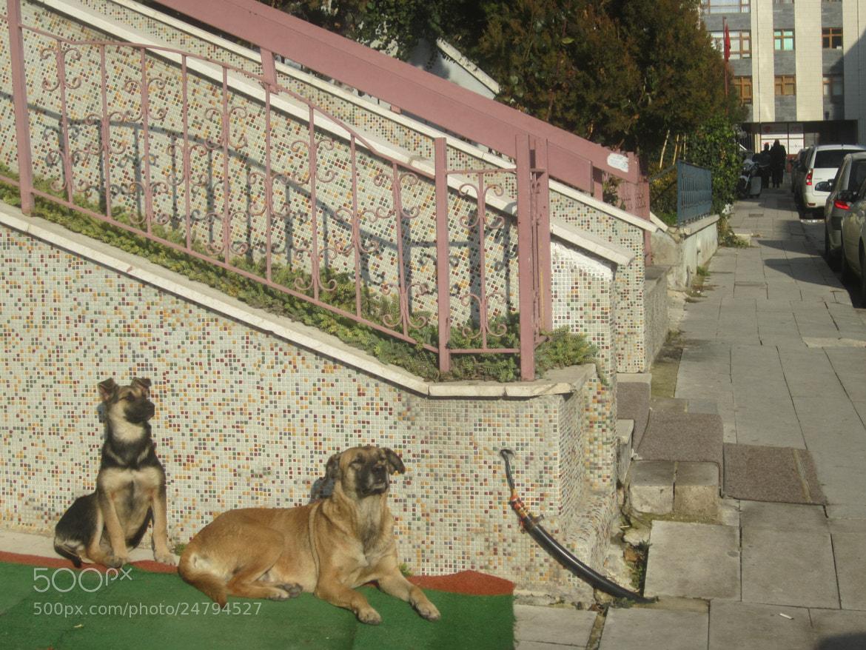 Photograph Bu Köpekler Nereye Bakıyor? by Mehmet Kurt on 500px